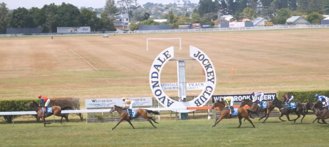 The Avondale Jockey Club Guide
