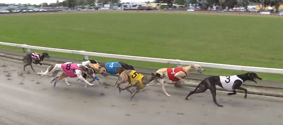 Wanganui Greyhound Racing Club Guide